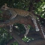 wilderness-safari-4