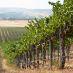 paso-robles-wine-country-1