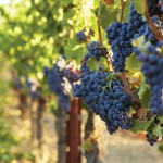 paso-robles-wine-country-7