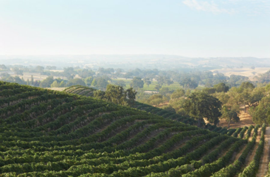 Photos provided courtesy of the Paso Robles Wine Country Alliance and Dusi Vineyard.