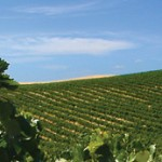 header_vineyards