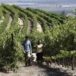 Monterey_Wine-6-1024x680