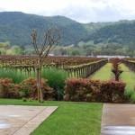 bell_wine_cellars_vineyard