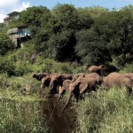 majesty-southern-africas-wilderness-6