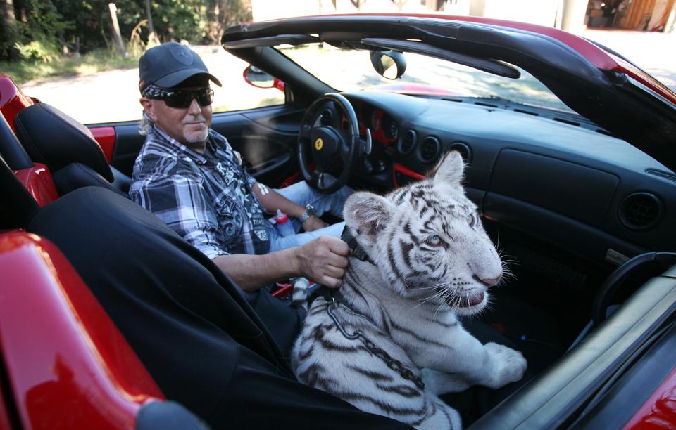 Making A Statement Designer Pets Of The Super Rich