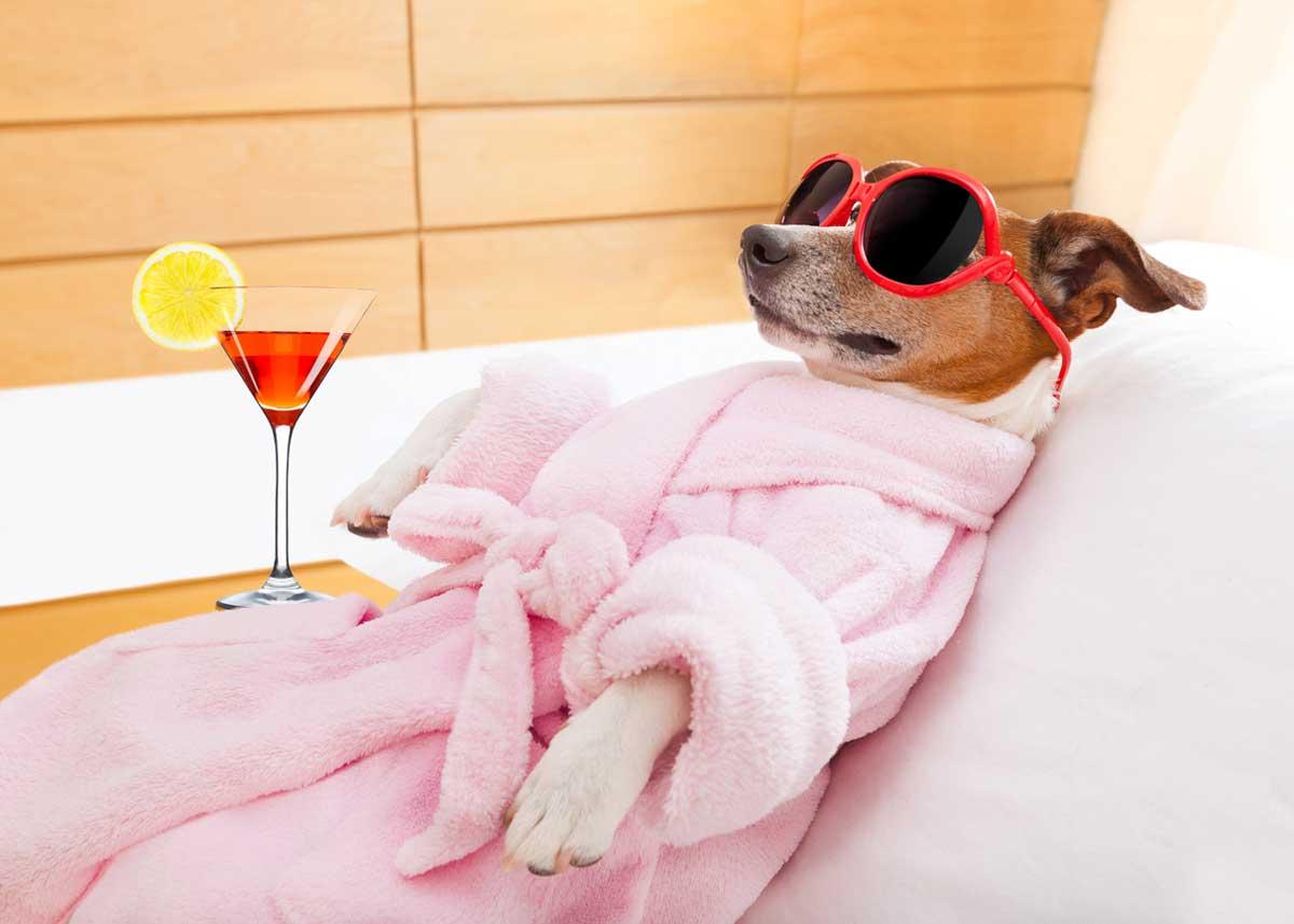 Luxury Pet Resorts