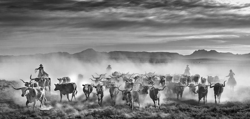 The Thundering Herd: Texas, USA - 2021